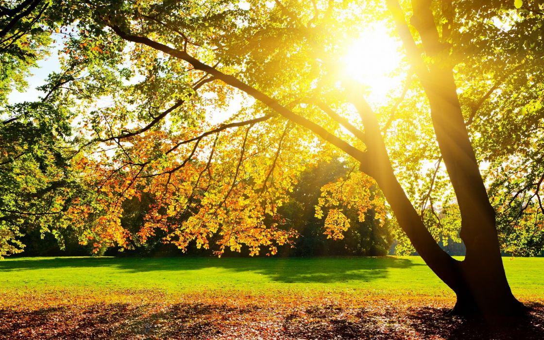 landscapes Sun trees wallpaper