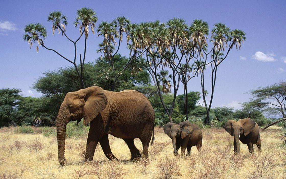 animals elephants baby elephant baby animals wallpaper
