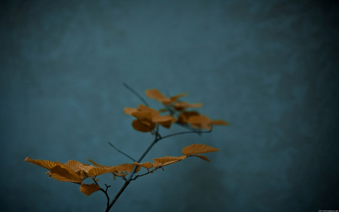 leaves plants potted plant wallpaper