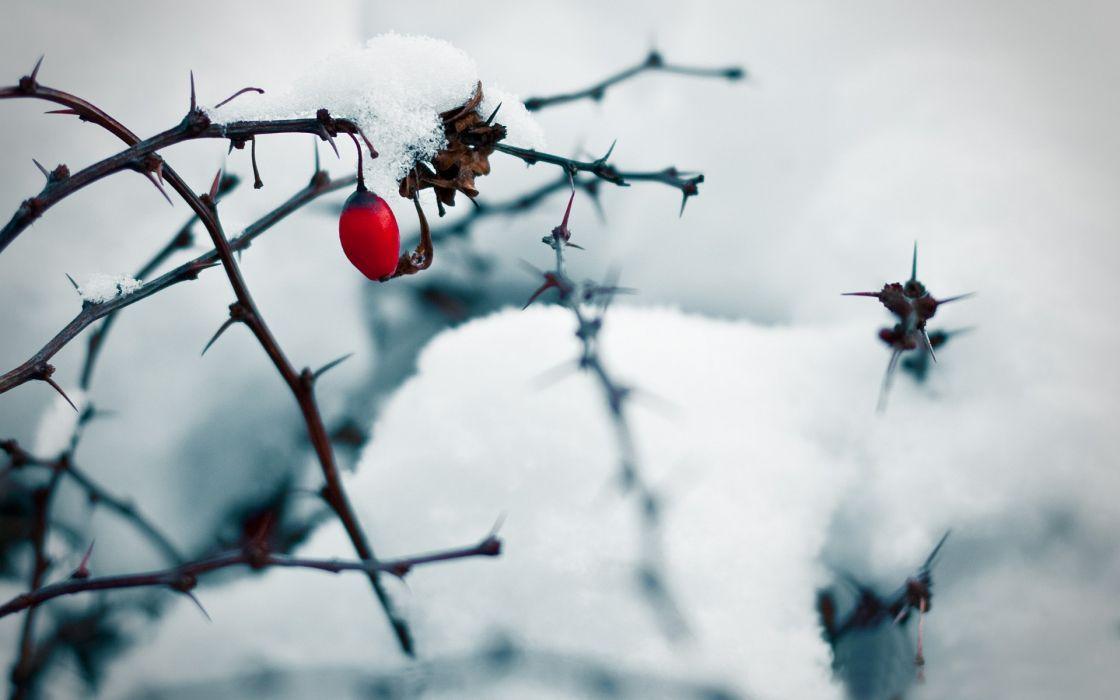 ice nature winter snow berries wallpaper