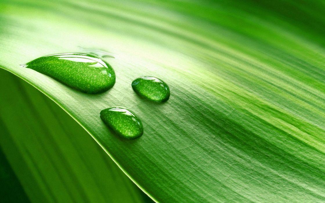 nature water droplets macro wallpaper