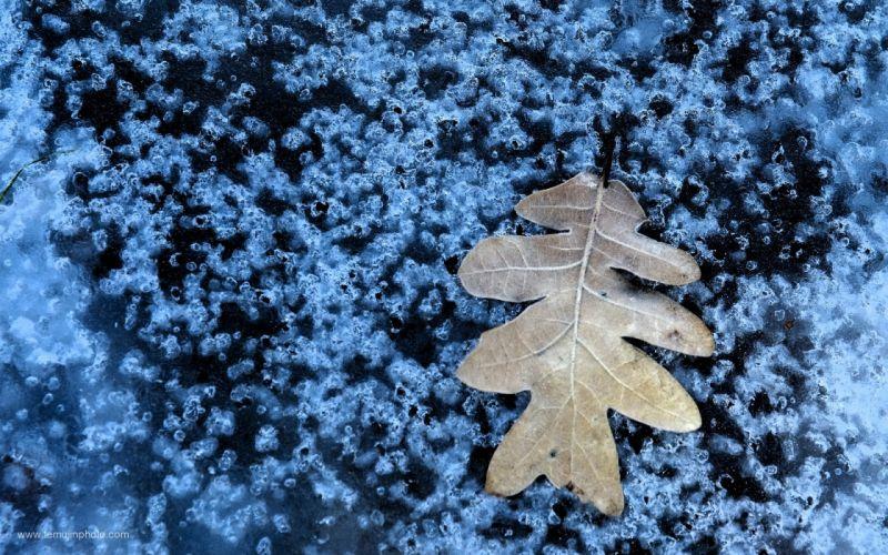 ice nature winter leaf cold bubbles macro wallpaper