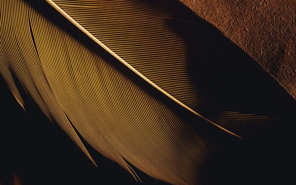 lights feathers macro wallpaper