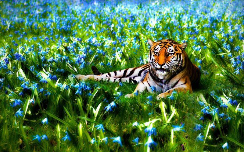 nature flowers animals tigers wildlife wallpaper