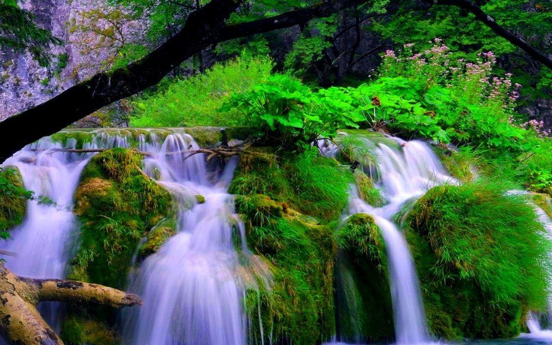 Forest Waterfalls wallpaper