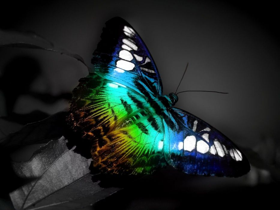 color butterfly wallpaper