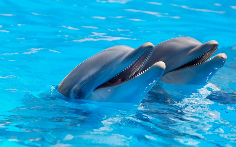 water dolphins wallpaper