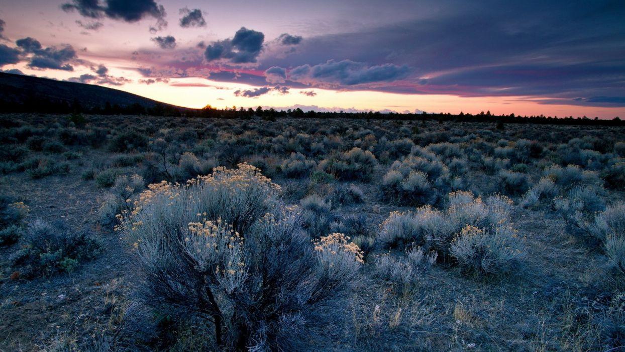 Landscape Sunset desert sky clouds sunrise sunset plants flowers wallpaper