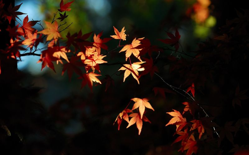 Leaves Autumn fall light silhouette wallpaper