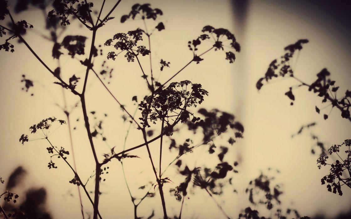 night plants silhouette nature sunset mood wallpaper