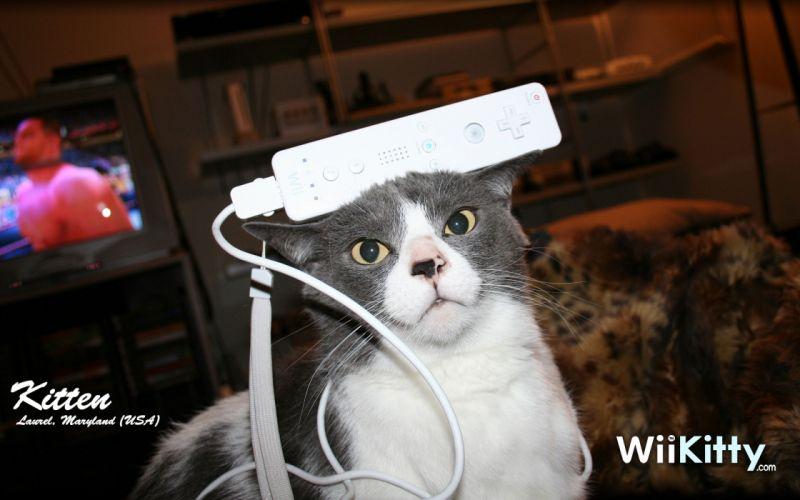 cats humor Nintendo Wii wallpaper