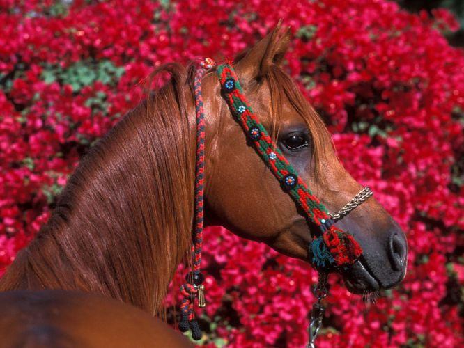 animals horses wallpaper
