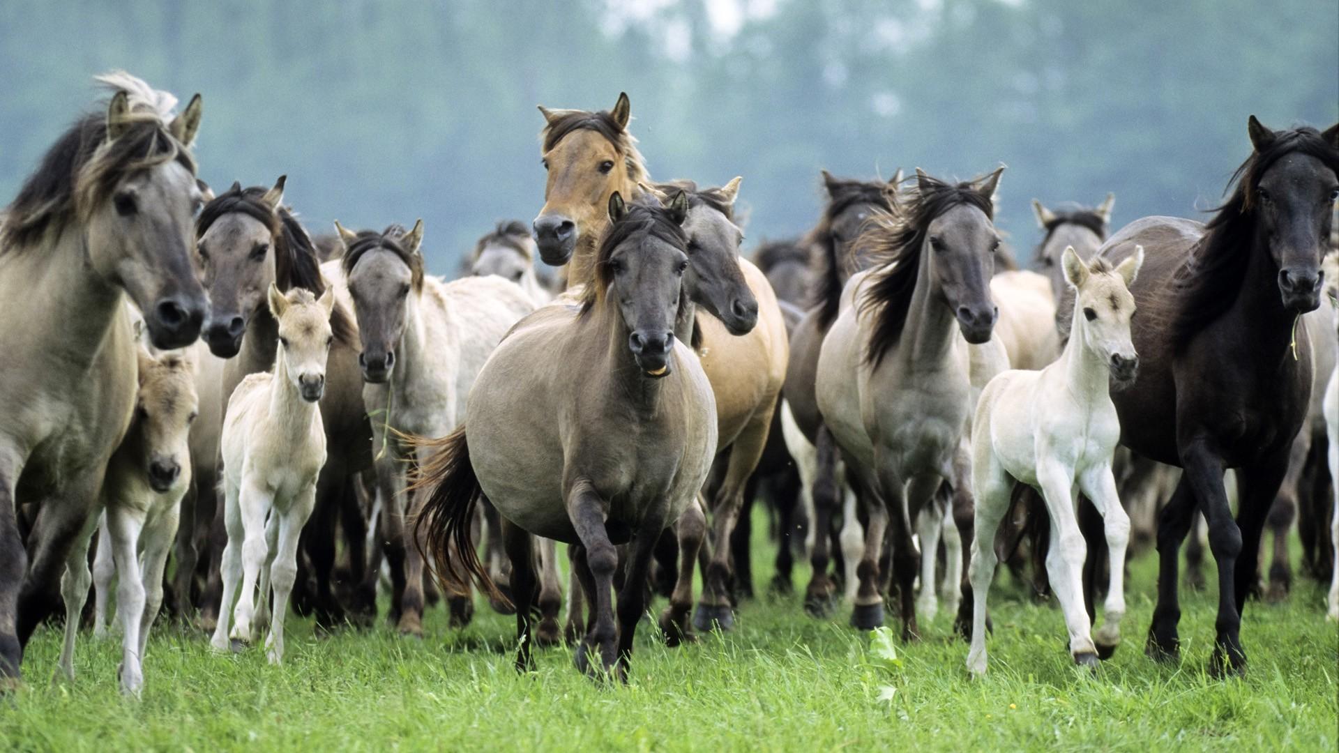 Germany wildlife horses running