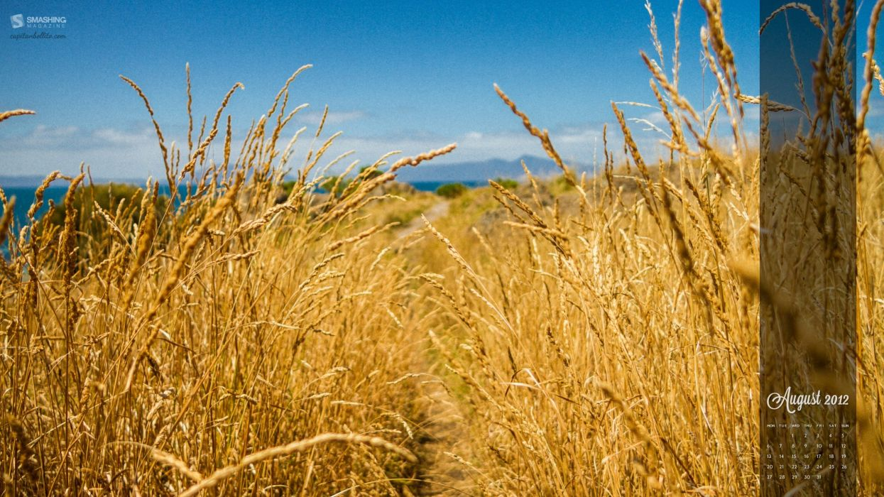 nature wheat August calendar Smashing magazine wallpaper