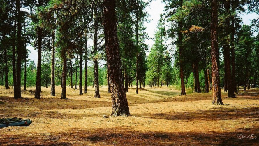 nature trees forest landscapes wallpaper