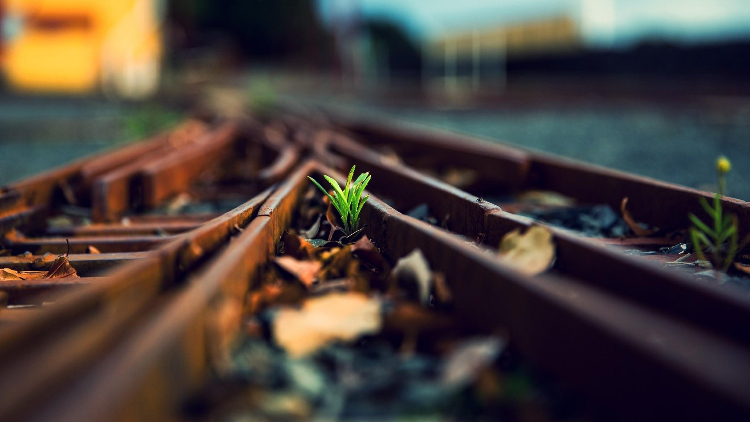 Grass tracks train tracks wallpaper | 2560x1440 | 59147 ...