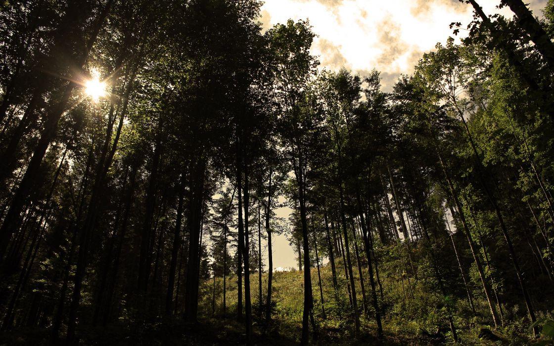 landscapes trees wallpaper