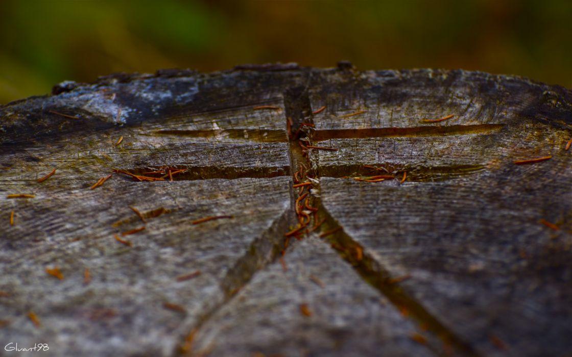 nature symbol roots wallpaper