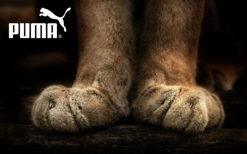 puma HDR photography paws wallpaper