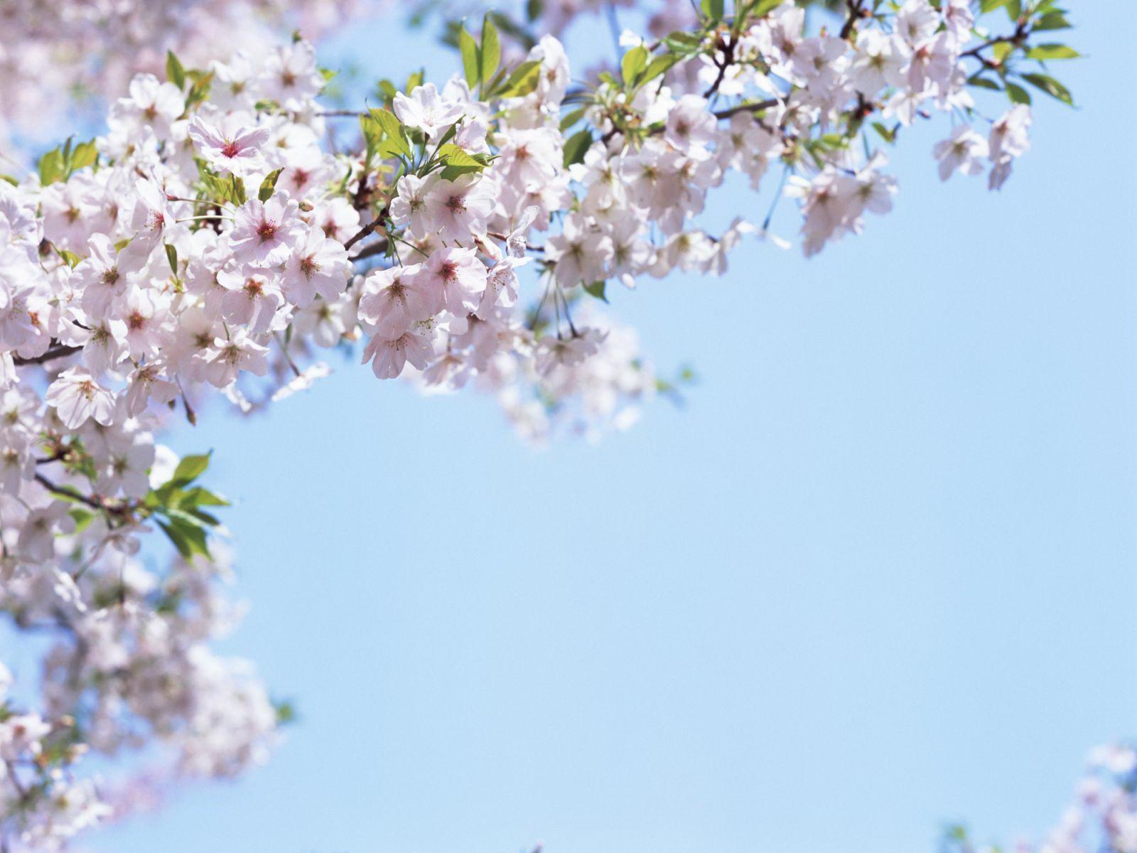 Spring season wallpapers