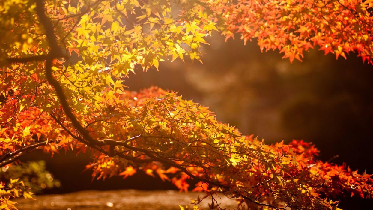 nature trees autumn (season) leaves sunlight wallpaper