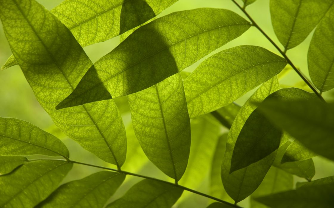 nature leaves digital art macro depth of field wallpaper