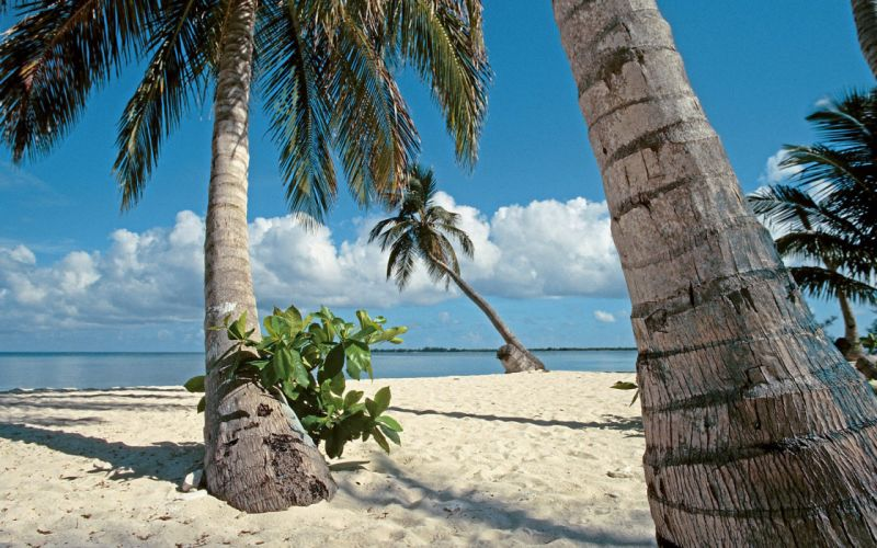 landscapes beach sand palm trees wallpaper