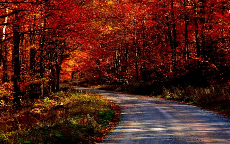landscapes trees forest roads wallpaper