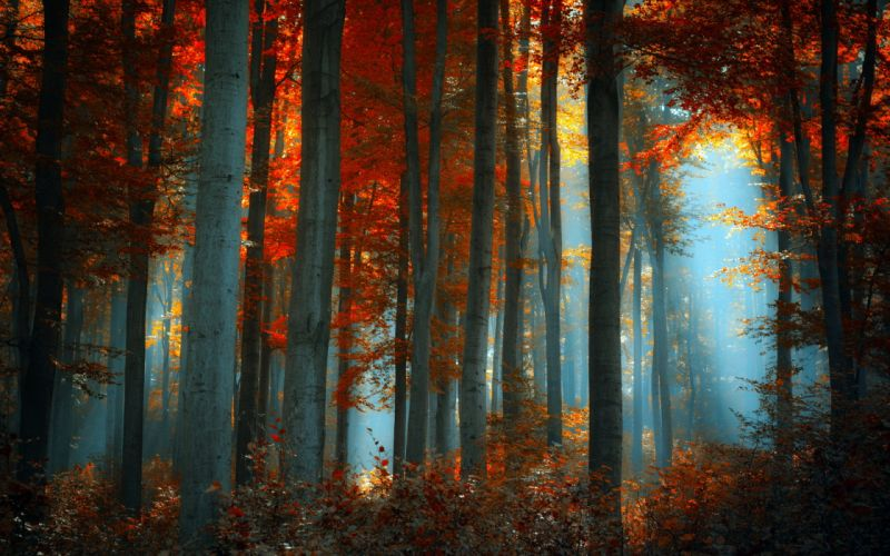 Earth Forest wallpaper