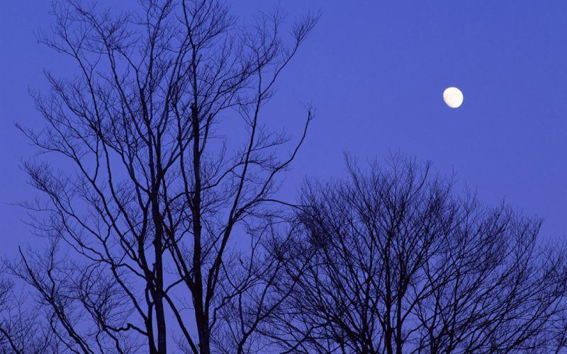 Japan trees night Moon wallpaper