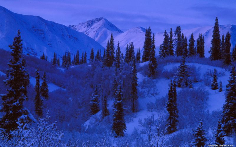 mountains nature forest snow landscapes wallpaper