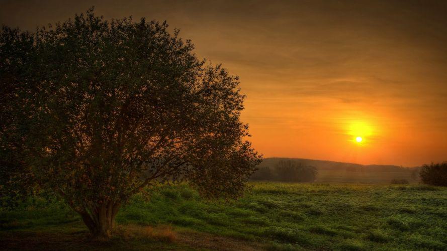 sunset landscapes trees fields wallpaper