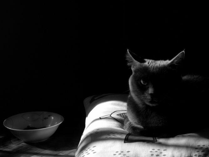 indoors cats pillows monochrome wallpaper
