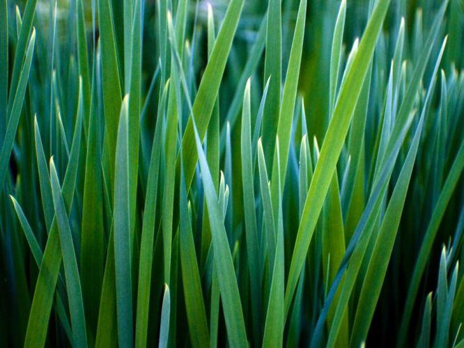 green vegetation wallpaper