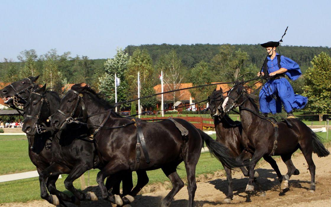 Hungarian Horseman wallpaper