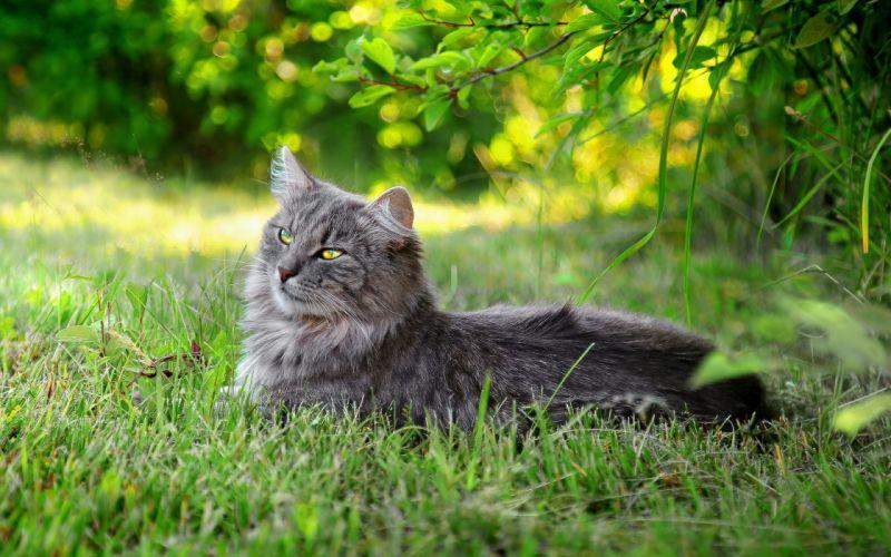 cats animals grass wallpaper