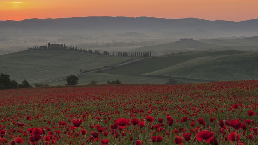 sunrise nature Italy poppy Crete Tuscany wallpaper