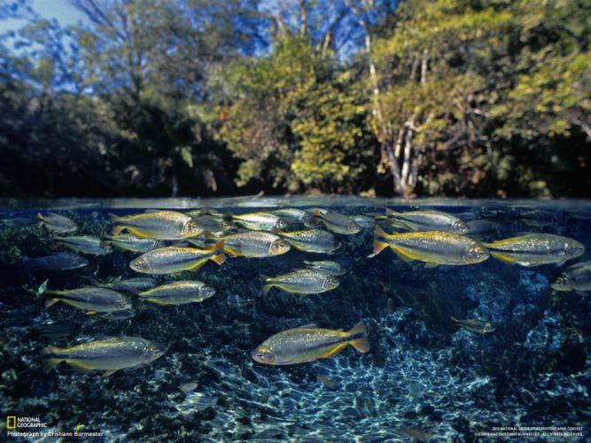 nature fish National Geographic underwater split-view wallpaper