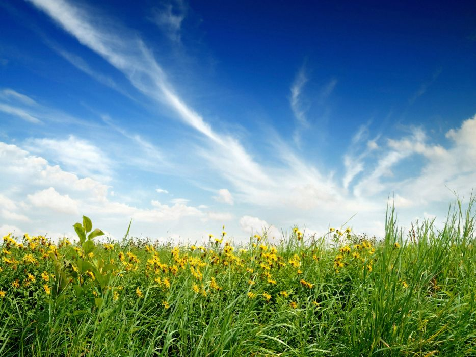 green blue clouds nature flowers grass fields meadow meadows skyscapes wallpaper