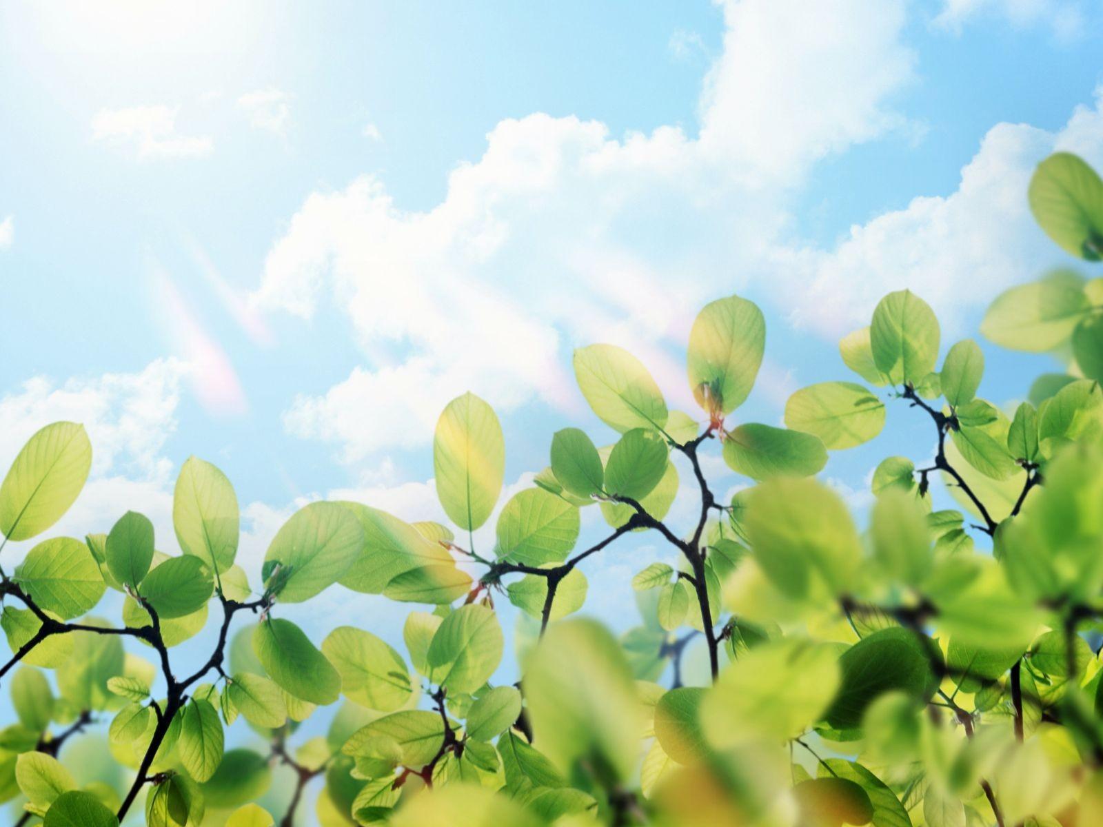 Лучи света сквозь листья  № 3096134 загрузить