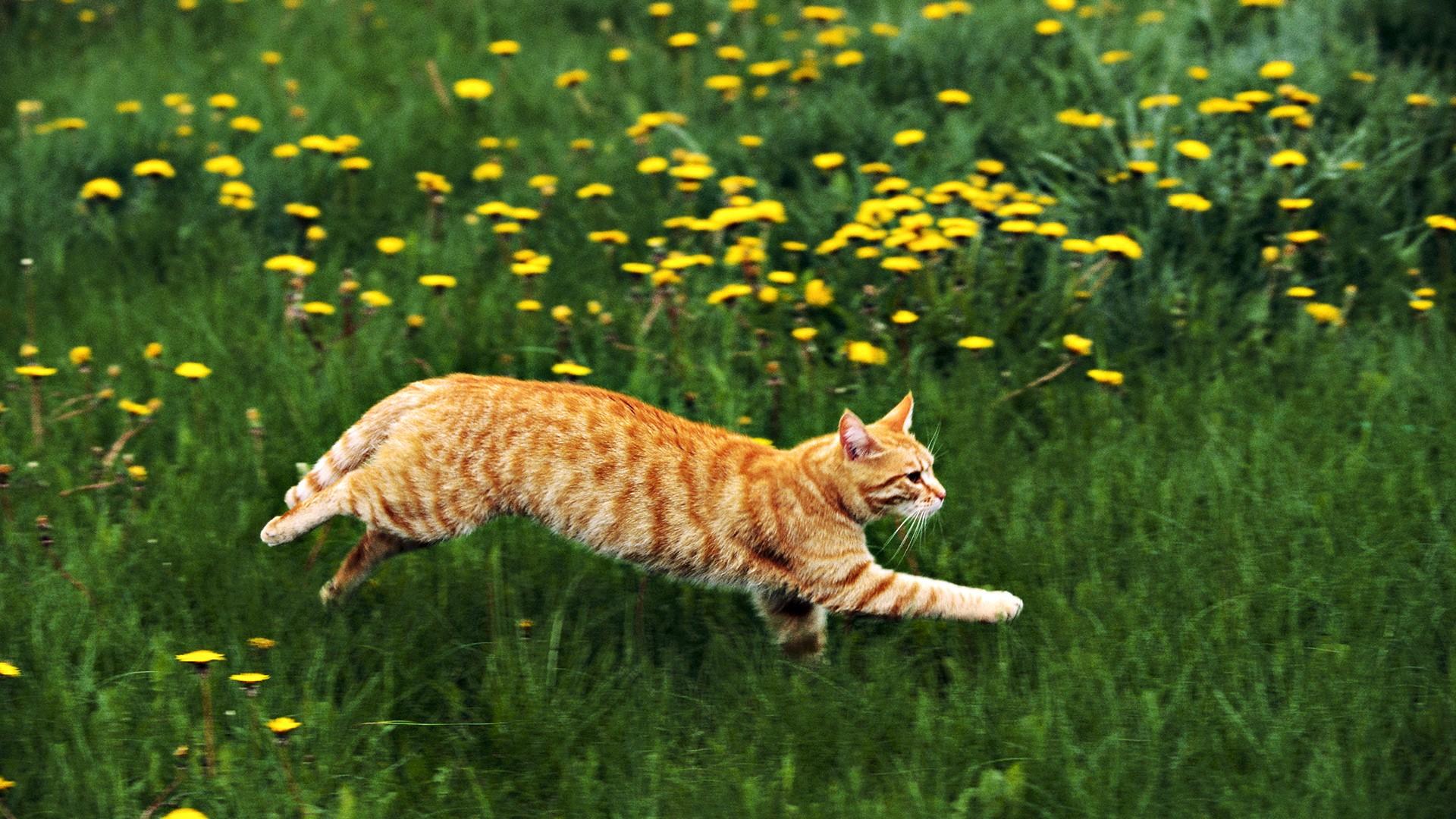 Статьи про кошек и собак.  Фотогалерея.  Доска объявлений.  Собаки, Щенки, фото кошек...
