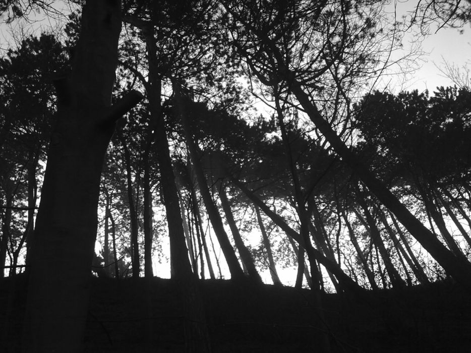 black and white nature trees gray wallpaper