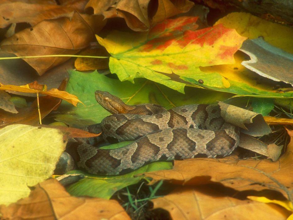 snakes reptiles wallpaper