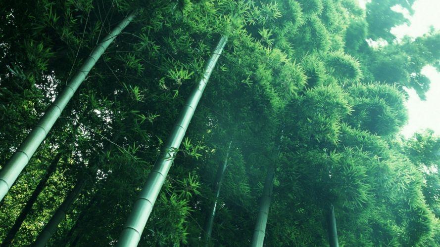 landscapes nature leaves bamboo below stalks wallpaper