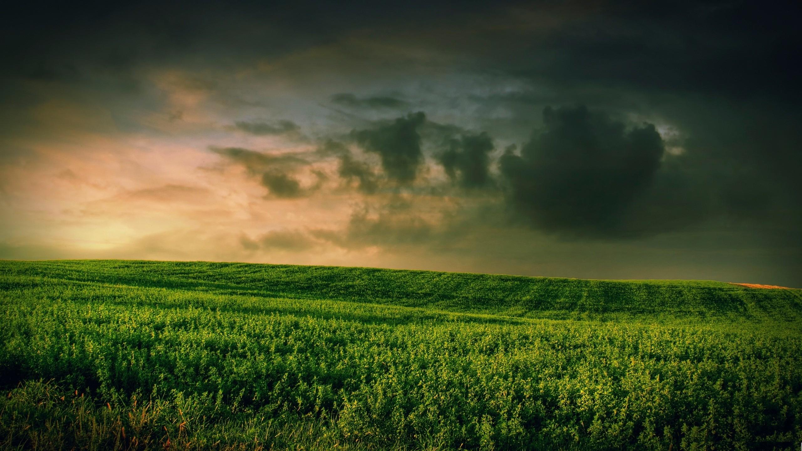 abstract grass wallpaper - photo #5