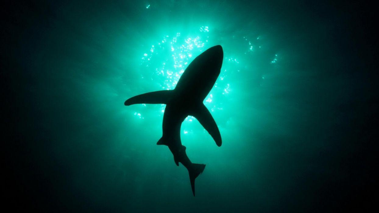 silhouettes sharks underwater wallpaper