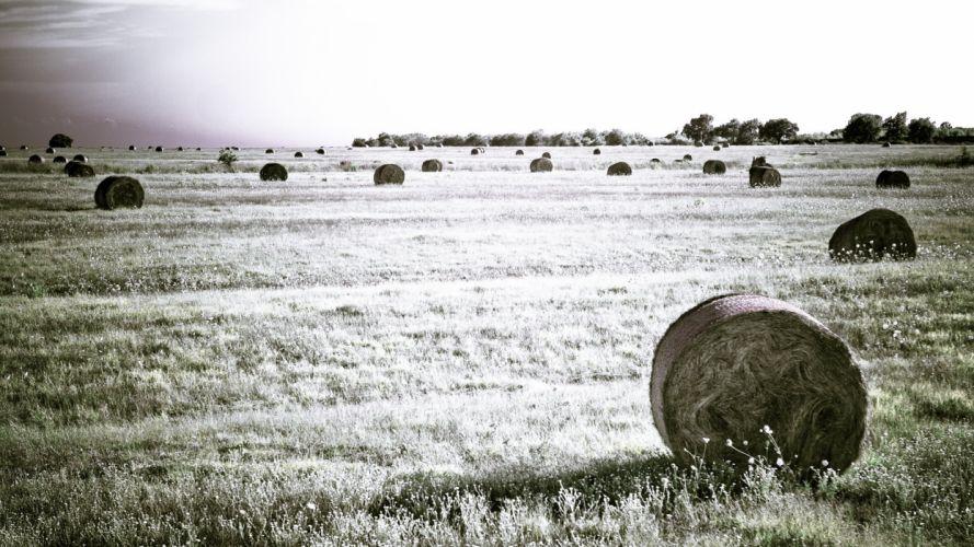 fields hay wallpaper