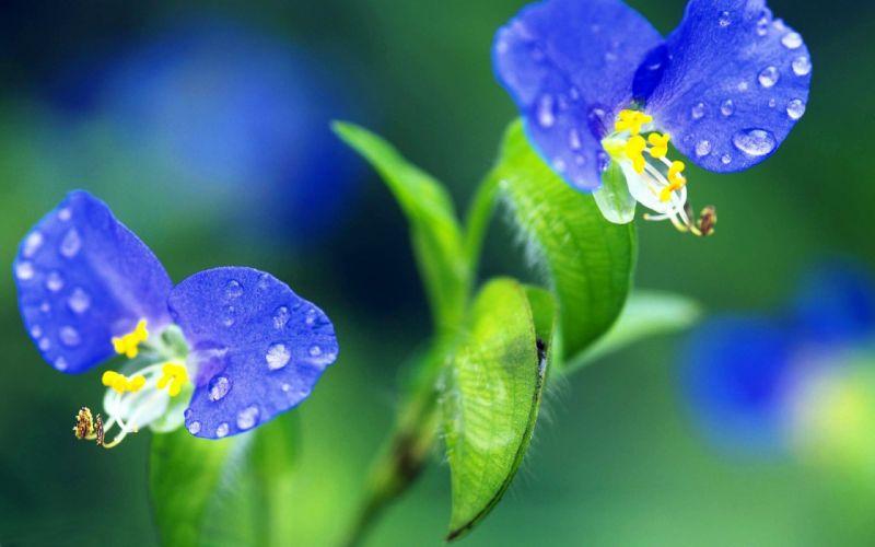 flowers water droplets macro wallpaper