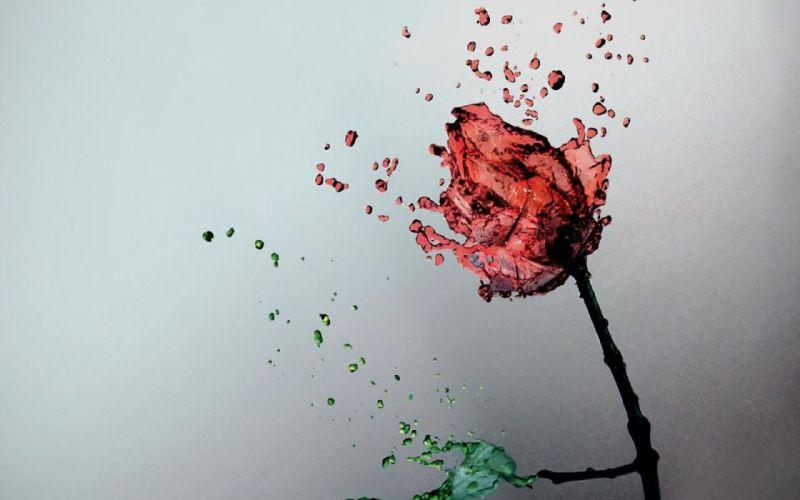 red Rosa roses wallpaper