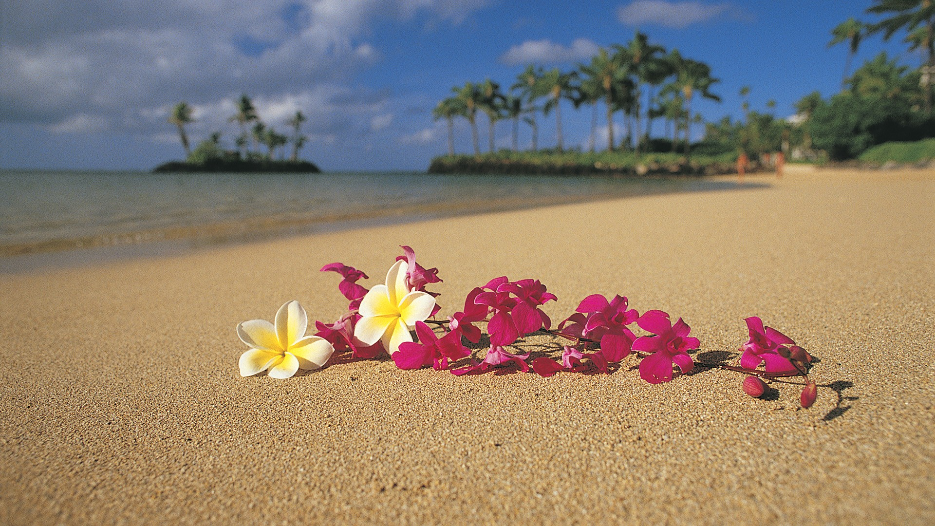 Beach Sand Flowers Hawaii Palm Trees Oahu Pink Plumeria Wallpaper